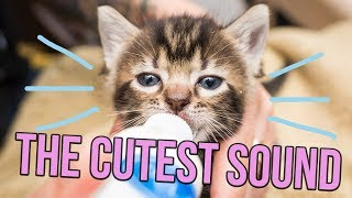 One of Kitten Lady's most recent videos: