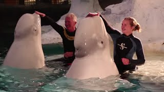 SeaWorld Orlando Helps Dream Come True for Atlanta Teen Losing Vision | SeaWorld Orlando