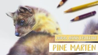 Animal Artists Collective | Drawing a PINE MARTEN with COLORED PENCIL