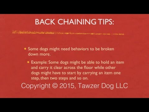 Using Back Chaining to Train Tricks, Dog Sports and Real World Behaviors - Pamela Johnson