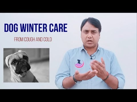 Dog winter care: Cough and cold care tips (Hindi)