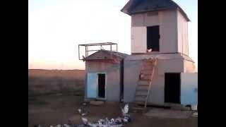 Бойные голуби (мрамор)2014г.Волжский