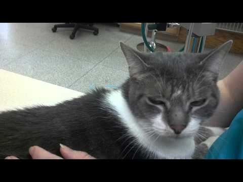 Pawsitive Steps Rehab - Acupuncture