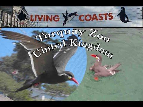 zoo animals, Living Coast Torquay Zoo Part 3, Beautiful Animals