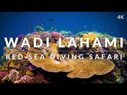 This is Wadi Lahami, Fury Shoals (4k) - Red Sea Diving Safari