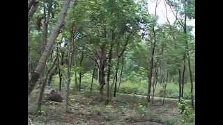 tingling sensation at forest