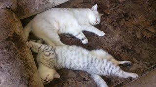 Как развлечь кошку....Кошка-мама и котёнок-сынок 2,5 мес