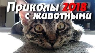 Смешные видео приколы 2017 про животных) приколы, ютуб приколы, приколы бесплатно.