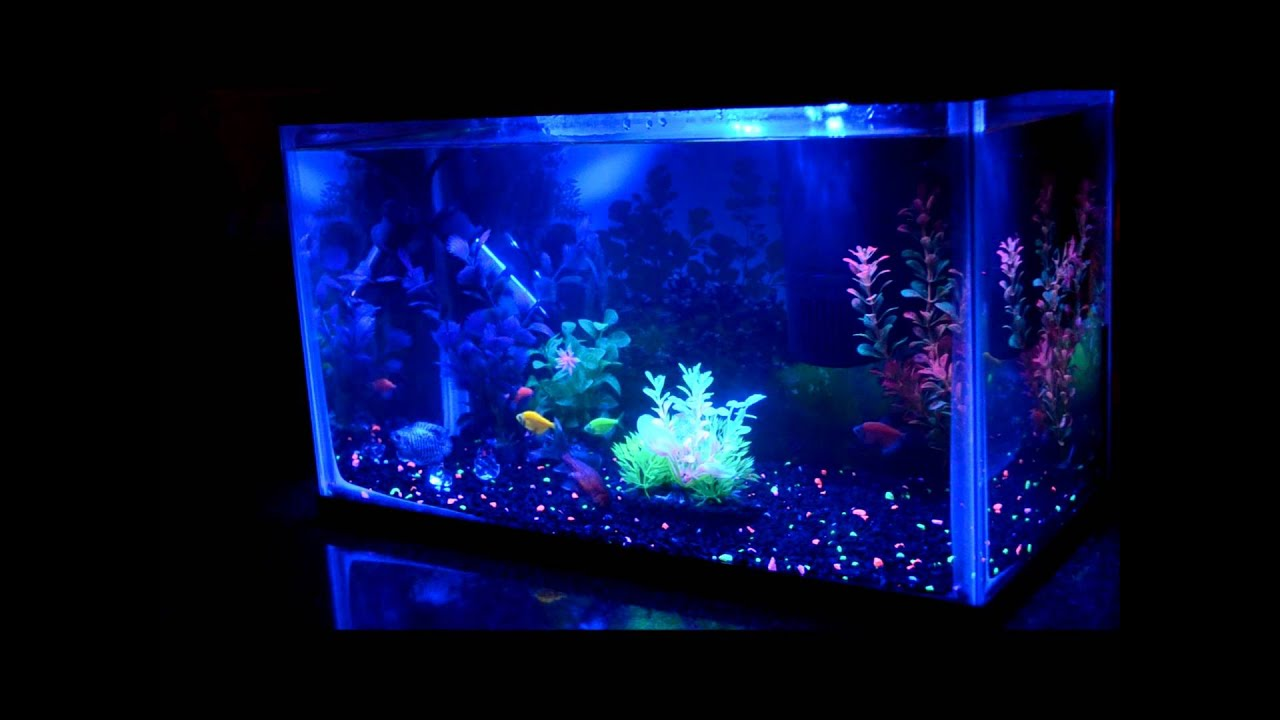 glofish aquarium part 4 fish in and happy youtube