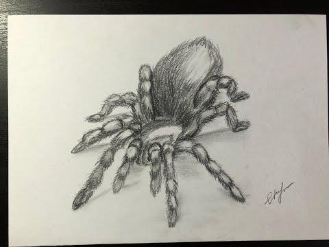 ����spider/паук/как нарисовать паука карандашом