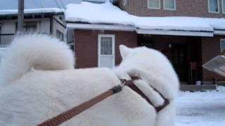寒くてつらい冬に頑張る除雪のおじさん、楽しいお散歩も除雪車にはげん...