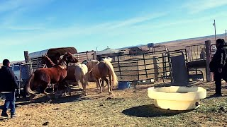 BUYING MORE HORSES on the NAVAJO RESERVATION  who do we buy from?