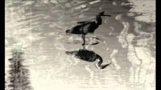 Scanner & David Rothenberg - The Serpentine Way