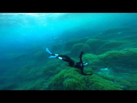 FishhStudios ⚓ Ocean explorers
