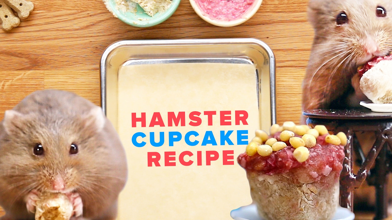 How To Make Tiny Cupcakes For Your Hamster
