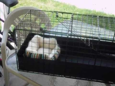 Building a homemade guinea pig cage c c cage part 1 of for Diy c c guinea pig cage