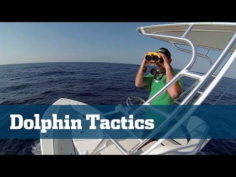 Dolphin Fishing; How To Catch More Dolphin - Florida Sport Fishing TV