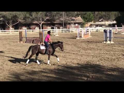 SOLD Auto Pilot Undersaddle More at Vogel Equine