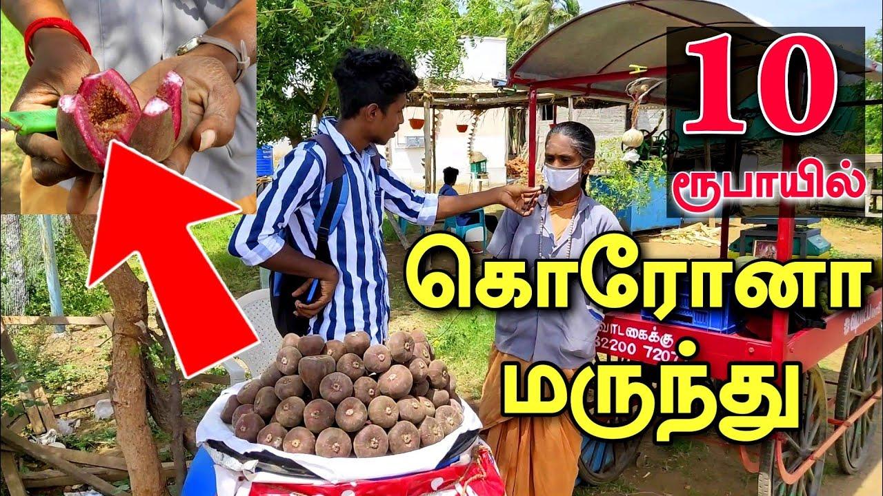 அனைத்து நோய்களையும் தீர்கும் அதிசய பழம் | increase immunity tips in Tamil | Edison Vlogs