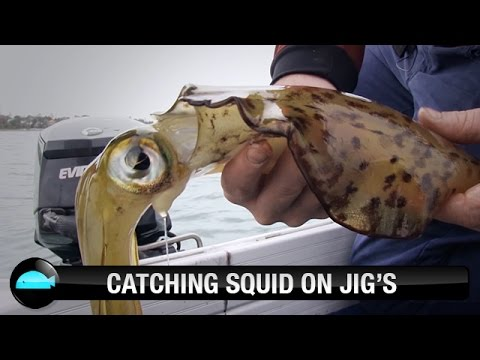 Catching Squid On Squid Jigs | We Flick Fishing Videos