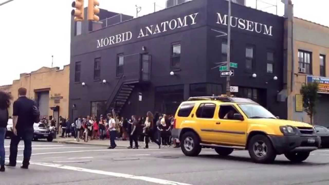 Morbid Anatomy Museum Brooklyn New York - YouTube