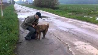 Дрессировка собак. Воспитание щенка. Подчиняем собаку себе.(Принуждение совсем не всегда - вещь неприятная. Наша задача - подчинить четырехмесячного щенка, внушив ему..., 2013-05-23T21:49:44.000Z)