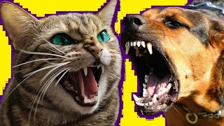 Cats vs dogs Funny pets funny videos – 2020