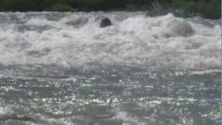 長良川 ベンツの瀬に挑む