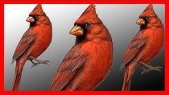 Northern Cardinal Song - Download CD - Excellent - Cardinalis Cardinalis