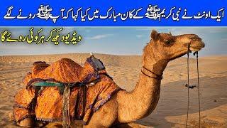 Video Nabi Pak SAW Aur Oont Ka Waqya ( Our ProphetHazrat Muhammad PBUH & a Camel ) Urdu/Hindi download MP3, 3GP, MP4, WEBM, AVI, FLV Agustus 2018