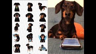 guess-what-the-crusoemoji-set-is-here-cute-dachshund-emojis