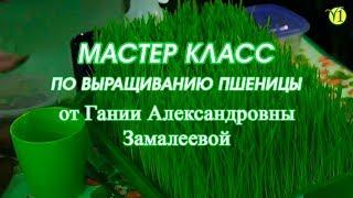 Мастер класс по выращиванию пшеницы  2018  Замалеева Г А  Адекватное питание