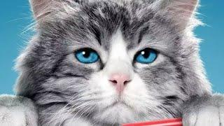 Девять жизней (фильм) Смешной Кот !!!
