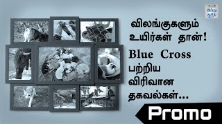 blue-cross-video-chennai-promo-detail-information-about-blue-cross-hindu-tamil-thisai