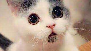 Клип котята! Песня:Я Кошечка Гламур Мур МУР