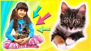 Кошка 😻 или кукла ЛОЛ? – котёнок Кима мешает распаковывать игрушки