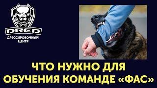 Что нужно для обучения собаки команде ФАС / ЧУЖОЙ?Важно с чего начать работу по охране?Теория обзор