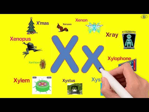 Words starting with X