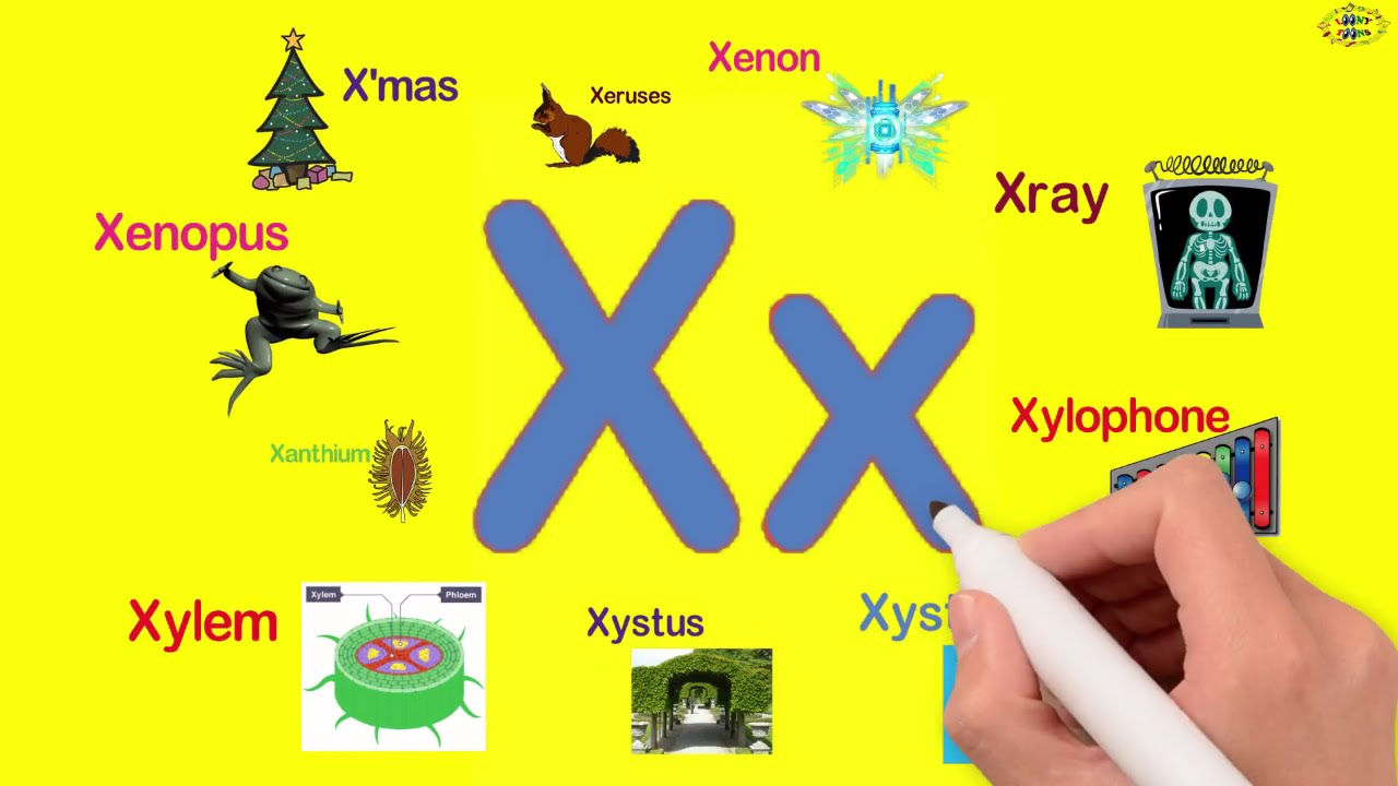 words beginning with the letter x words starting with x 25701 | maxresdefault