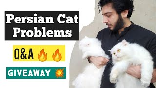 How to make Persian Cat healthy and Fluffy | Persian cat Problems | tips for happy and healthy Cat