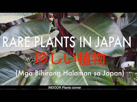 RARE PLANTS IN JAPAN| 珍しい植物| BIHIRANG HALAMAN SA JAPAN!