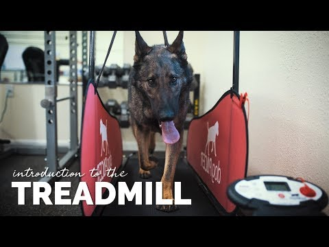 introducing-your-dog-to-the-treadmill
