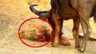 Ten shocking animal battles captured on camera Десять Шокирующих Битв Животных Снятых На Камеру