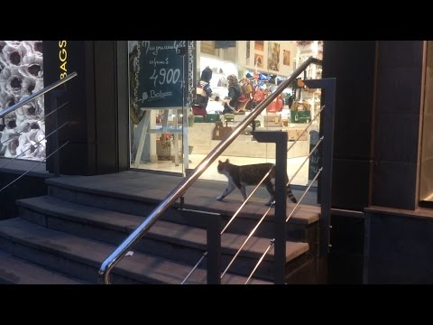 Yerevan, 30.10.16, Su, Video-4,(на рус.), Опять магазины, там же.