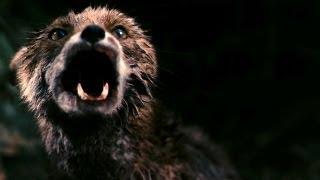 Video Antichrist - Chaos Reigns download MP3, 3GP, MP4, WEBM, AVI, FLV November 2019