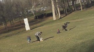 ���� ����� �� ������� \ Eagle attack a child