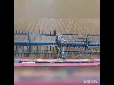 Colheita na fazenda em sinop MT