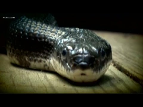 Laura - Snake Knocks out Power in North Carolina