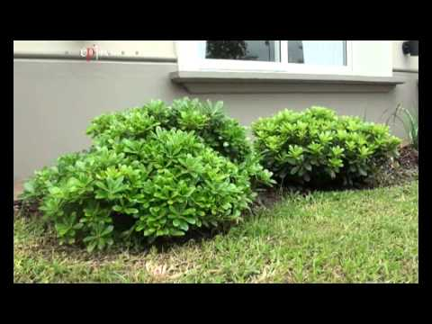Jardines Colgantes Yerba Buena Tucuman Youtube