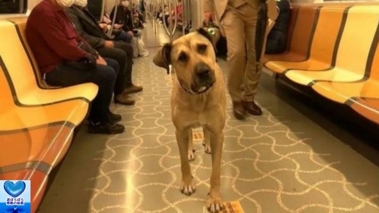 電車やバスにひとりで乗る犬。毎日旅する地域犬の姿に思わず笑顔がこぼれる【感動】